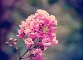 Beautiful pink flowers vintage style — Stock Photo
