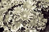 Beautiful flowers Duotone Black&white, high key. — Stock Photo