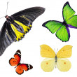 Set Beautiful butterfly Yellow, red and green isolated on white — Stock Photo #64266835