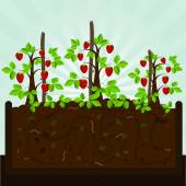 Strawberry tree and compost — Stock Vector