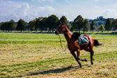 Carrera de caballos — Foto de Stock