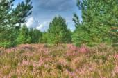 Landscape on the moor — Stock Photo