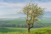 Tuscany Spring Landscape Italy — Stock Photo