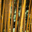 Detail of Yellow Bamboo Canes.  — Stock Photo #70920603