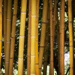 Detail of Yellow Bamboo Canes.  — Stock Photo #70921269