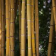 Detail of Yellow Bamboo Canes.  — Stock Photo #71913385