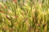 Fluffy grass background — Stock Photo