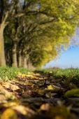 The Walls of Ferrara during autumn with fallen leaves on the gro — Stock Photo