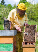 Beekeeper checking a beehive — Stock Photo
