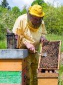 Проверка улей пчеловода — Стоковое фото