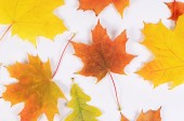 The autumn maple leaves a background — Stock Photo
