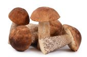 The brown cap boletus isolated on white background — Stock Photo