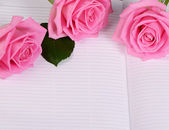 The rose on the book — Stock Photo