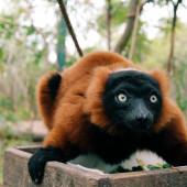 Monkey close up — Stock Photo