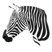 The Zebra stripes — Stock Vector