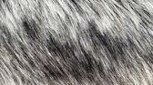 Background gray fur — Stock Photo