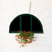 Window and red flower — Stock Photo