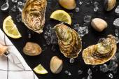 Fresh oysters and clams on a black stone plate top view — Foto de Stock