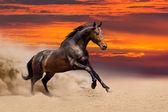 Beautiful bay horse  free running — Stock fotografie