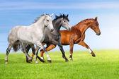 Horses run in pasture — ストック写真