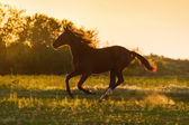 Horse at sunset — Stock Photo