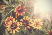 Vintage flower nature background.  — Stockfoto