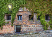 Old red brick wall with wild grapes. — Stockfoto