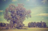 Filtre sonbahar alan ağaçlarla retro vintage resmini. — Stok fotoğraf