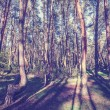 Vintage style picture of Crooked Forest, Poland. — Stock Photo #55960637