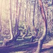 Vintage style picture of Crooked Forest, Poland. — Fotografia Stock  #55963917