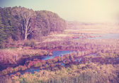 Vintage filtered nature autumn background. — Stock Photo