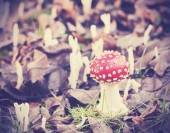 Vintage filtered picture of toadstool in forest. — Stock Photo