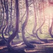 Vintage filtered picture of sunset at mysterious forest. — Stock Photo #56161873