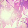 Autumn leaves against sun, vintage filtered nature background. — Stock Photo #56162979