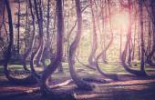 Vintage filtered picture of sunset at mysterious forest. — Stock Photo