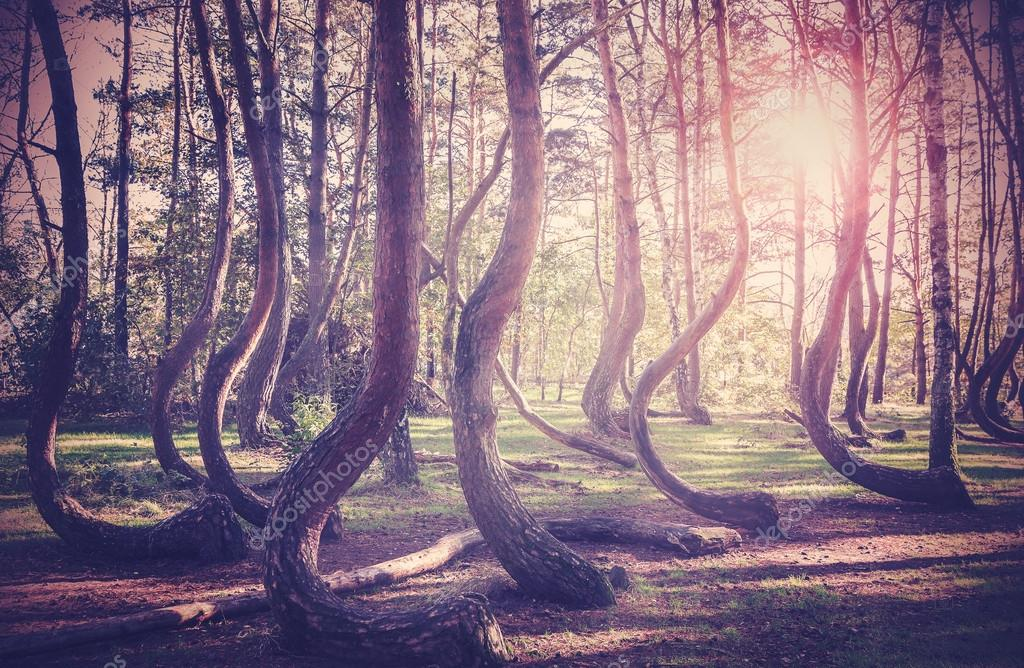 Фотообои Vintage filtered picture of sunset at mysterious forest.