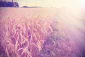Vintage photo of side road through field at sunset. — Stock Photo