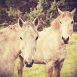 Retro style picture of two young horses. — Stock Photo #56642425