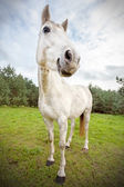 Picture of funny horse, shallow depth of field. — Stock Photo