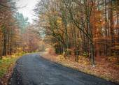 The picture of a road in autumnal forest. — Stock Photo