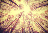 Looking up through leafless trees, retro filtered background.  — Stock Photo