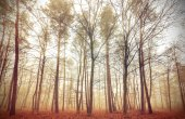 Retro filtered picture of a misty forest. — Stock Photo