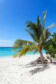 Vertical picture of beautiful tropical island. — Stock Photo