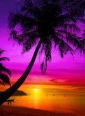 Palmiye ağacı siluet günbatımı, tropikal plaj. — Stok fotoğraf