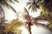 Retro toned and faded palms nature background. — Stock Photo