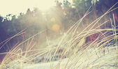 Vintage faded and blurred nature background with flare effect. — Stock Photo