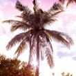 Vintage retro filtered picture of palm tree at sunset. — Stock Photo #65223693