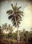 Vintage retro stylized tropical nature background with palm tree — Stockfoto
