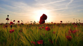Red poppy field in Thuringia — Stock Photo