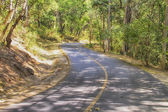 Empty road in jungle summer season in thailand — Stockfoto